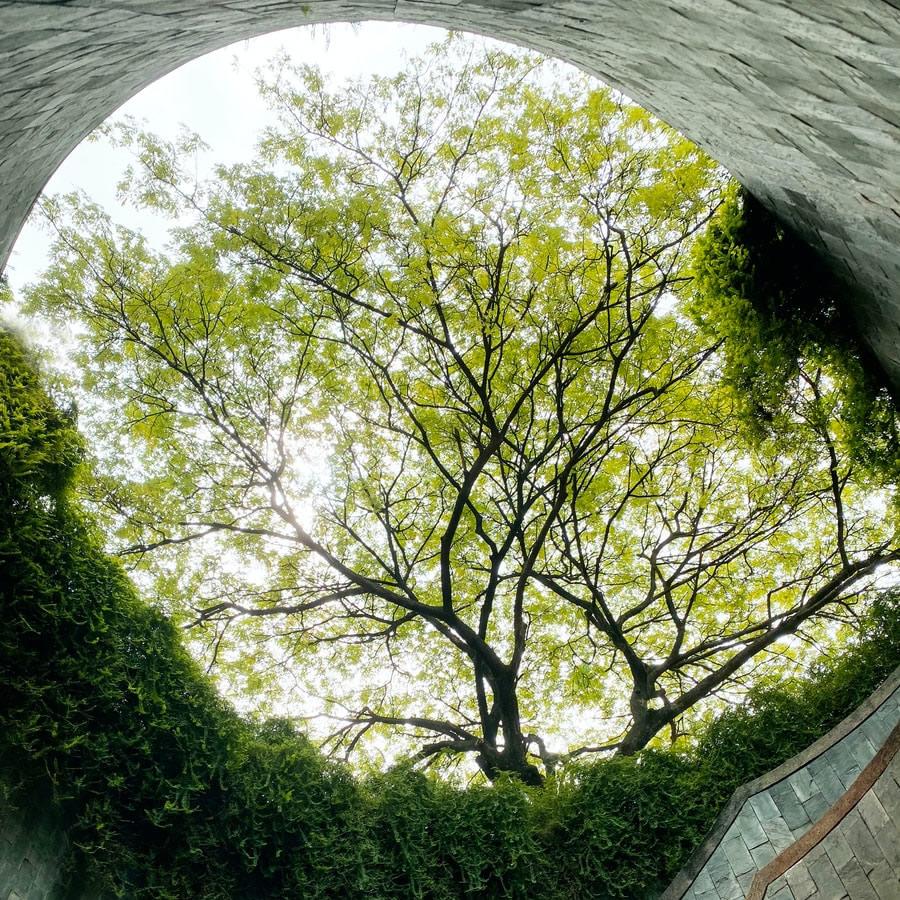 Round view of tree